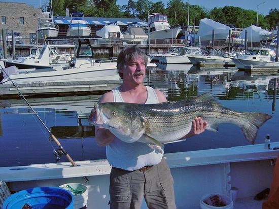 New york fishing report angler fleet may 31 for Long island sound fishing report