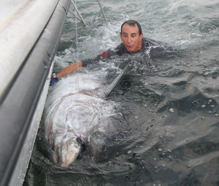 900lb Giant Bluefin Tuna