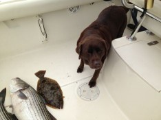 Mocha with her catch...don't mess with my fish !!!