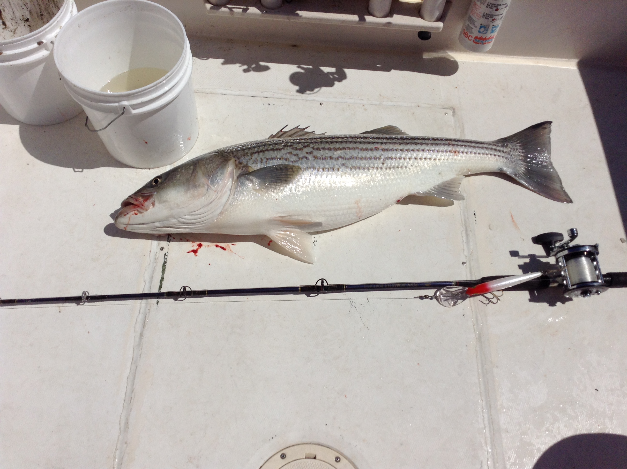 Atlantic highlands fishing report hot bass fishing in for Atlantic highlands fishing report
